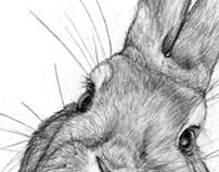 "Easter ""Rabbit"" Sketch"