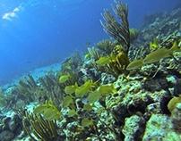 Bahamas Jan. 2013