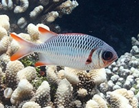 Polynesian Fishes