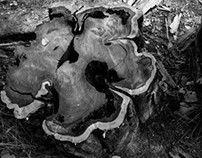 Deadwood - In the heart of Goiás.