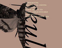 Entomology ipad Brochure