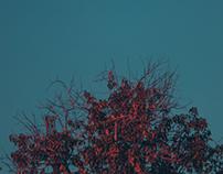 Sights of Bleu