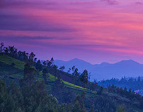 Shades of the Sun - Ooty
