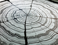 61 Years - Tree Rings