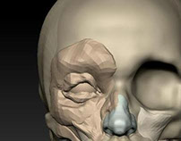 Facial Anatomy in ZBrush