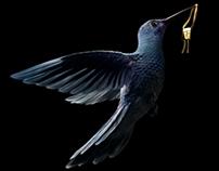 Hummingbirds & Black Orchids