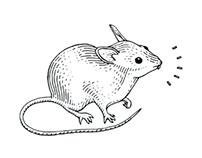 Some scientific illustrations