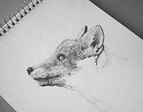 Portrait of a fox I