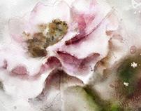 Digital Watercolor_Pink Rose