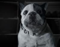 """""""Dog"""" :: AT&T Digital Life"""