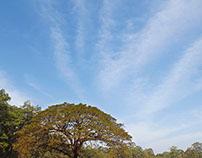 As seen at Angkor Wat