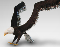 Eagle with silver feathers