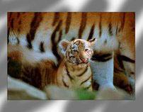 Rob Doolaard  - www.dierenfotografie.nl