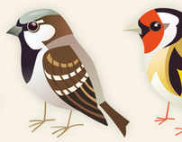 MXR BIRDS