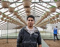 Portrait Travailleur en serres / Greenhouse worker