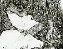 Frog (Book Illustration)