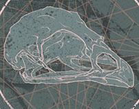 Animal Skull Pins