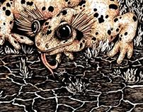 Salamander (Book Illustration)