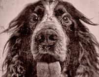 'TinType' Dog Portraits