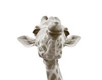 Photography - Al Ain Zoo