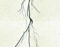 GROWIN' DEPTHS OF THE MONEY TREE