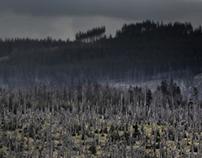 A Forest Wilderness