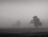 Under the veil of mist