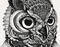 Owl portraits