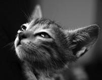 Activities of a cat