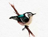 Watercolor Artworks