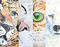 Animal Pencil Drawings by K. Fairbanks