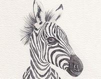 Watercolour: Animals