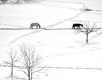 Frozen Paradise,Kashmir 2015