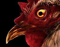 CUT – E ANIMALS / Combat Rooster