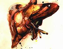 Watercolor anatomy
