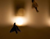"""solo exhibition """"Le chuchotement de l'ombre"""""""