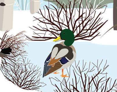 Inglewood Bird Sanctuary: interpretive panel